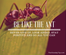 Be like the ant
