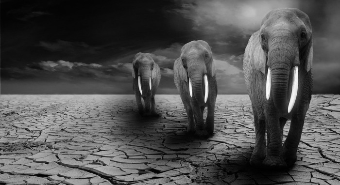 elephant-590020_960_720